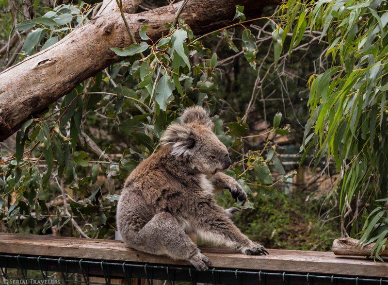 Excursion d'une journée à Phillip Island à la découverte de la faune australienne !