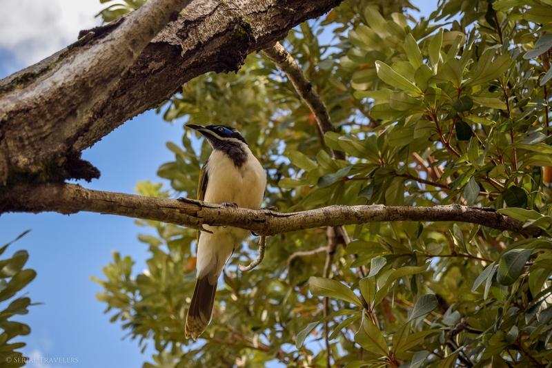 serial-travelers-australie-carlo-sandblow-bird5