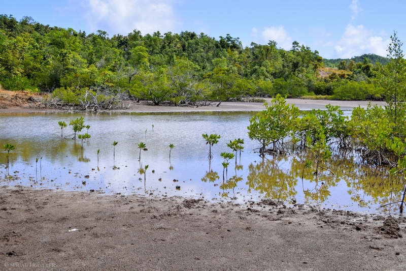 serial-travelers-martinique-randonnee-presquile-caravelle-mangrove5