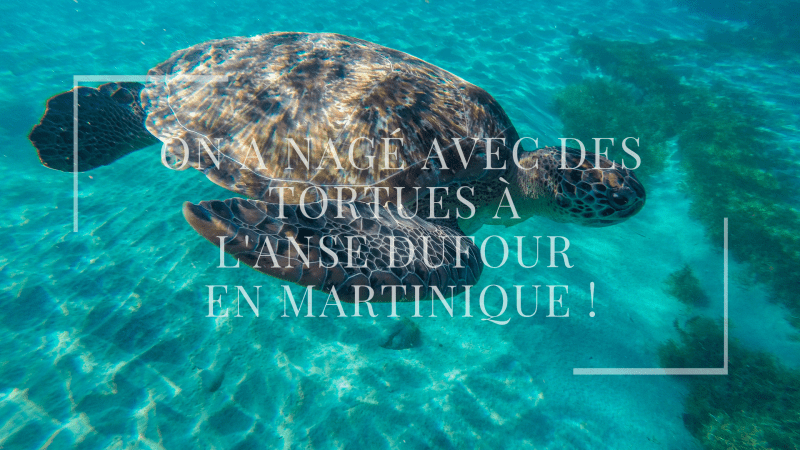 On a nagé avec des tortues à l'anse Dufour en Martinique !