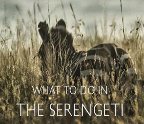 WTD_serengeti