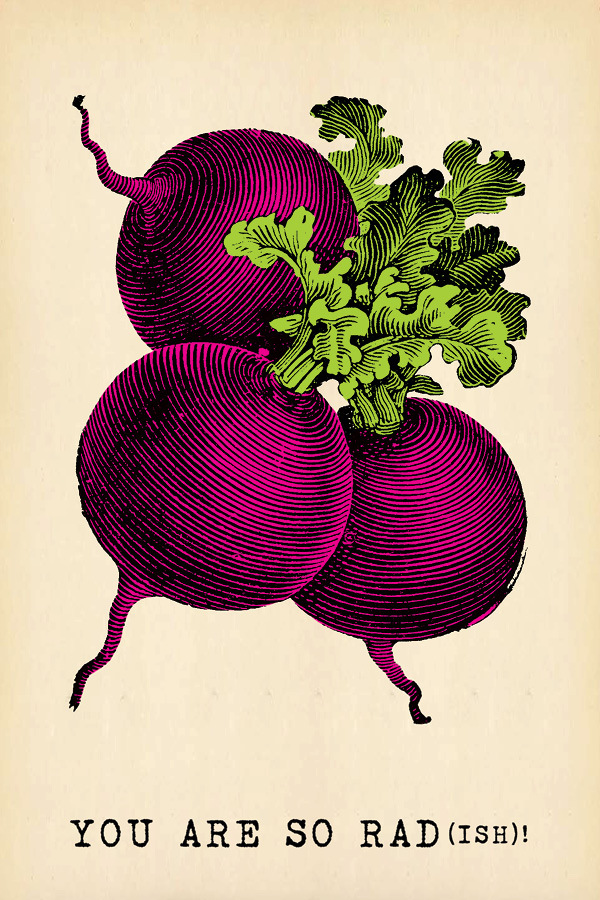Kitchen Art: Radish postcard from Sugarboo // Serious Crust by Annie Fassler