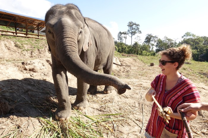 Elephant Jungle Sanctuary, Chiang Mai | Serious Crust by Annie Fassler