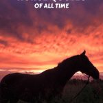 Horse Quotes Greatest Quotes About Horses Of All Time Seriously Equestrian