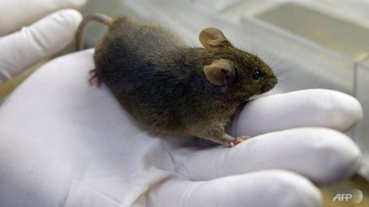 What's the point of even keeping mice around if they stop humping our gloved hands?