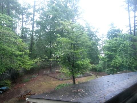 Spring rain at our backyard