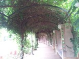 Vine Arbor