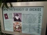 Darwin's Orchid History
