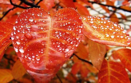 rainy-leaves
