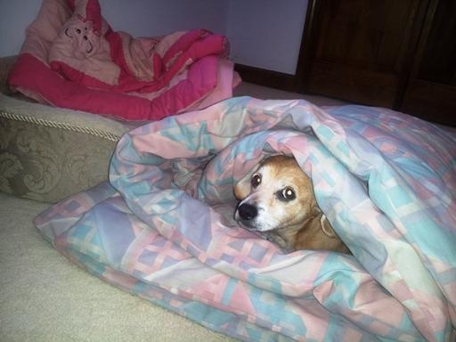 이불로 igloo를 만들고 낮잠을 잘 준비가 끝난 Tobey