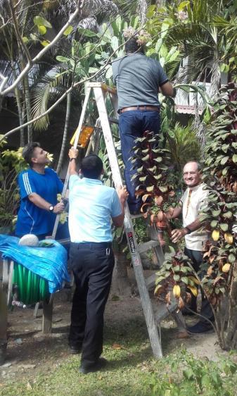 Recogiendo cocos