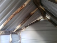 shed roof1