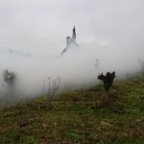 Un gorille dans la brume