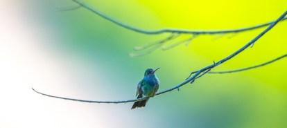 birds_peru_serrini_172