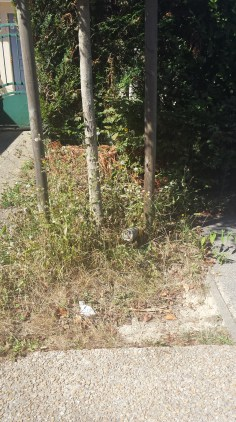 Rue du Buisson Cocher, quelques herbes folles?