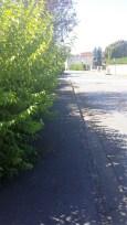 Route de meaux, les haies pas taillées obligent les piétons à marcher sur la route