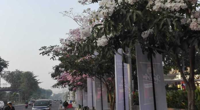 Sakura Surabaya