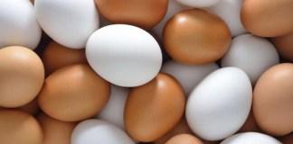 sebutir telur