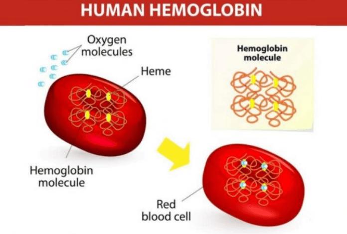 Kadar Hemoglobin Rendah? Ini 8 Cara Alami untuk Meningkatkannya!