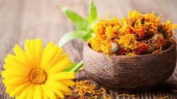 11 Manfaat Bunga Calendula untuk Kesehatan Kulit