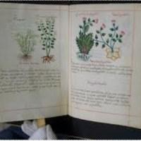 CÓDICE DE LA CRUZ BADIANO, TRATADO AZTECA DE MEDICINA Y HERBOLARIA