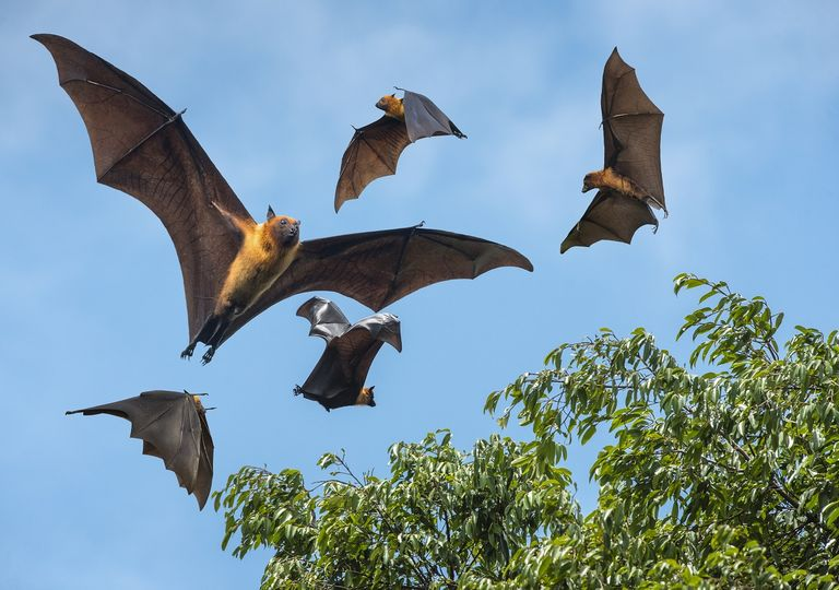 Bats carry a large part of zoonotic viruses: changing their geographic distribution will undoubtedly create a greater risk for the human population.