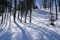 Sombras entre hayas y abetos sobre el suelo blanco.