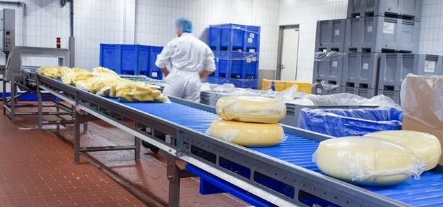 Personal fabrica de branzeturi Olanda