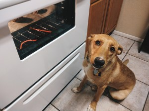 Athena waiting patiently for cookies dog treat recipe
