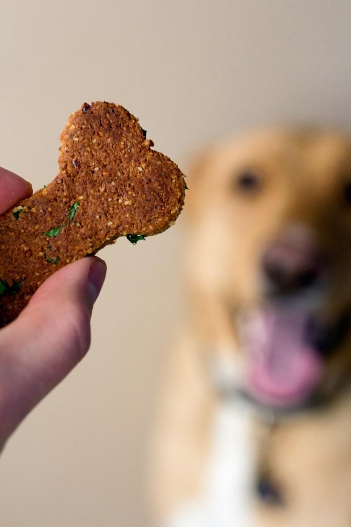Athena the puppy princess drooling over homemade vegan dog treat