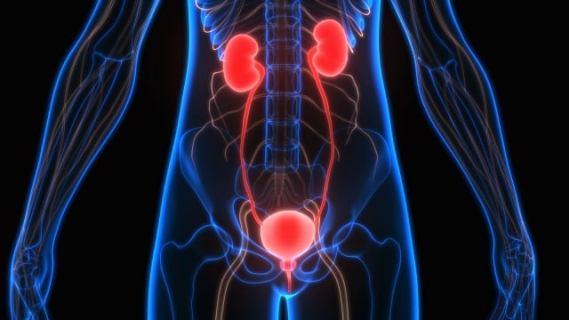sistemul urinar