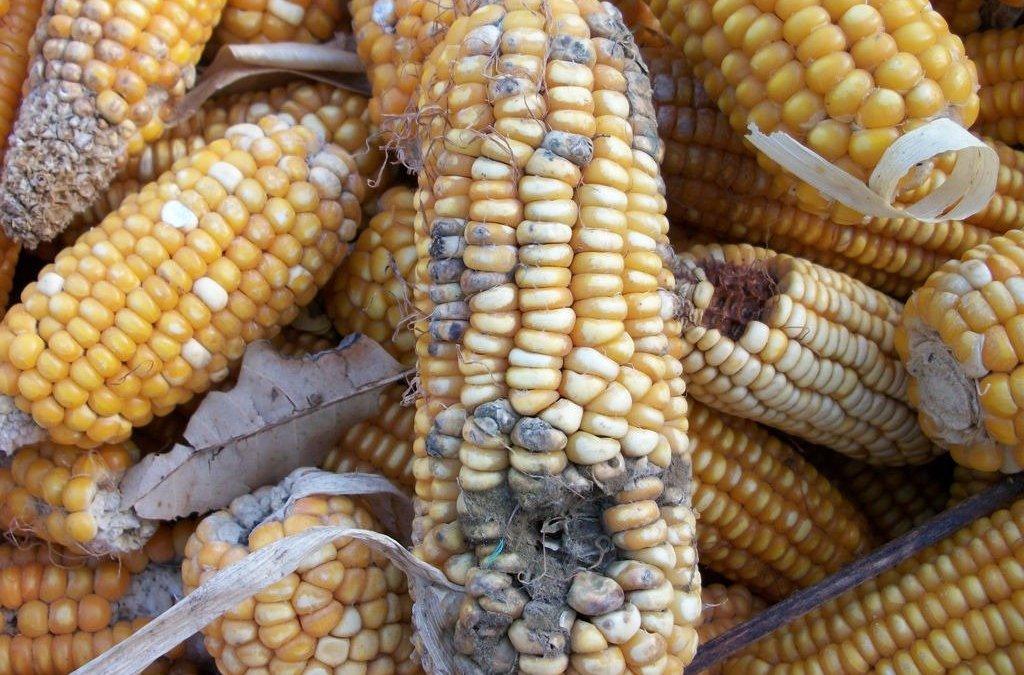 Managing Post-harvest Losses In Grains