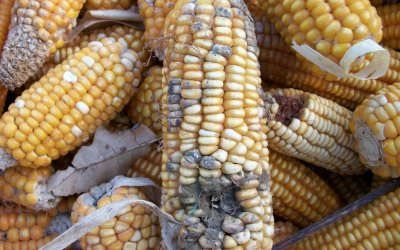 Managing post-harvest loss in grains
