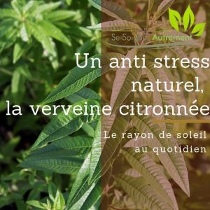 Un anti-stress naturel, la verveine citronnée