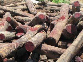 Le trafic de tronc de bois de rose
