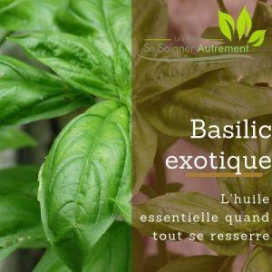 Fiche solution-phyto #31 – Huile essentielle de Basilic Exotique