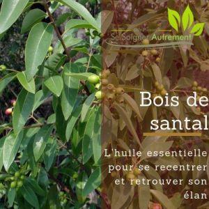 Fiche solution-phyto #29 – Hydrolat de Bois de Santal
