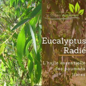 Fiche solution-phyto #41 – Huile essentielle d'Eucalyptus Radié