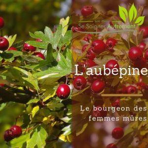 Fiche solution-phyto #35 – Bourgeon d'Aubépine