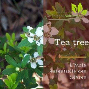 Fiche solution-phyto #48 – Huile essentielle de Tea Tree