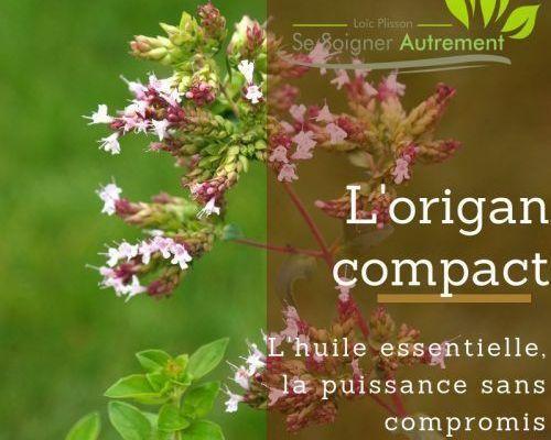 huile essentielle d'origan compact