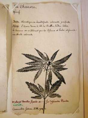 Extrait de l'herbier de J.F. Oberlin datant du 18ème siècle