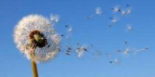 Le vent transporte les odeurs