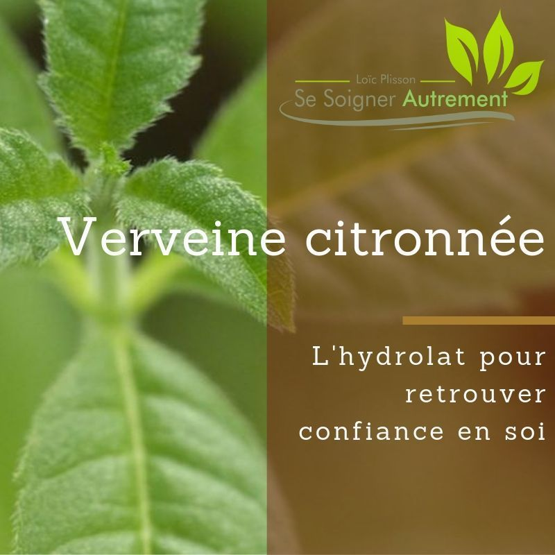 L'hydrolat de verveine citronnée, pour retrouver confiance en soi