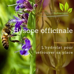 Fiche solution-phyto #14 – Hydrolat d'Hysope officinale