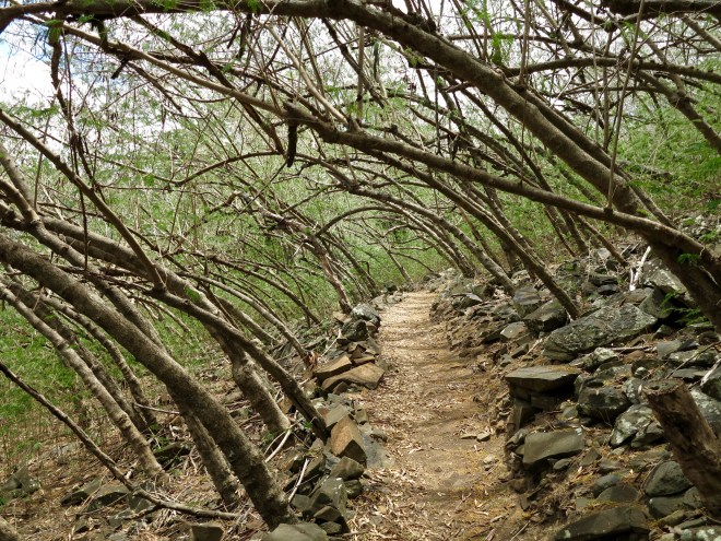Hiking trail above Taiohae Bay