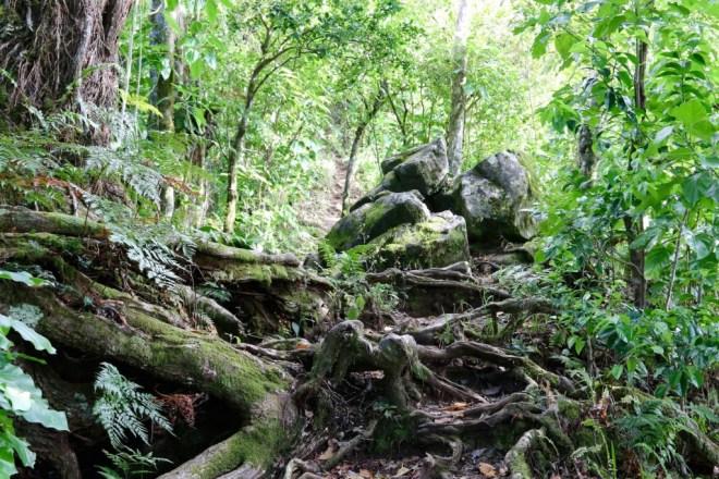 Mountain Path, Rarotonga