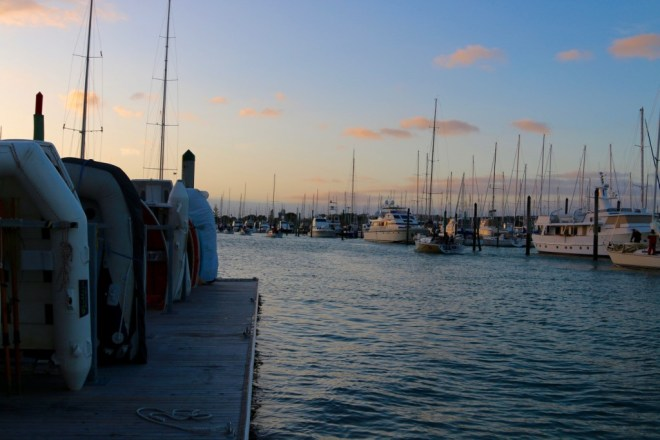 Boats returning from evening races in West Haven marina, Auckland
