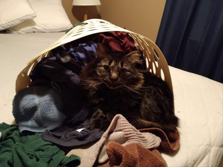 Loving some warm laundry