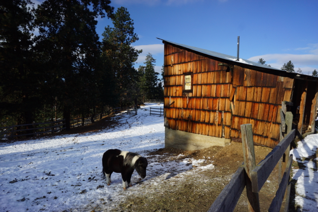 Yes, that is a miniature pony right outside! The Tiny House is located on a horse pasture, with a couple ponies. There are a dozen horses elsewhere on the property.